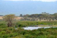 Ngorongoro Crater Hippos Resting