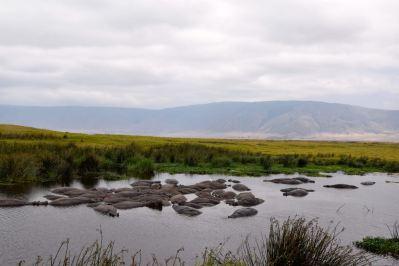 Ngorongoro Crater Hippos in Pool