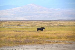 Ngorongoro Crater Rhino-2
