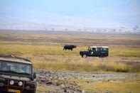 Ngorongoro Crater Rhino Freed