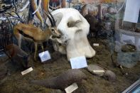 Arusha National History Museum Animal Display