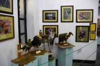 Arusha National History Museum Animals