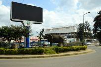 Arusha Street Elephant
