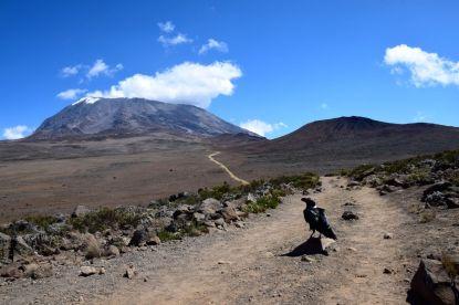 Kilimanjaro Horombo Hut Hike Raven