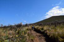 Kilimanjaro Mandara Hut Hike Kili