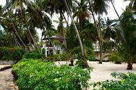 Next Paradise Zanzibar Garden