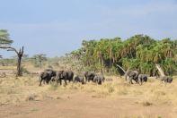 Serengeti Elephant From Forest