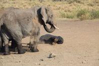 Serengeti Elephant and baby