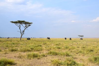 Serengeti Elephants in Distance