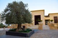Kempinski Ishtar Dead Sea Resort Entrance Tree
