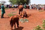 Nairobi The David Sheldrick Wildlife Trust Elephants-2