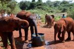 Nairobi The David Sheldrick Wildlife Trust Elephants Drinking