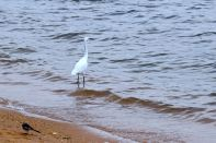 Lake Victoria Birds
