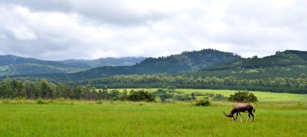 Swaziland Header