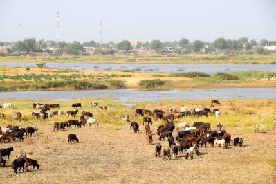 Chad Chari River