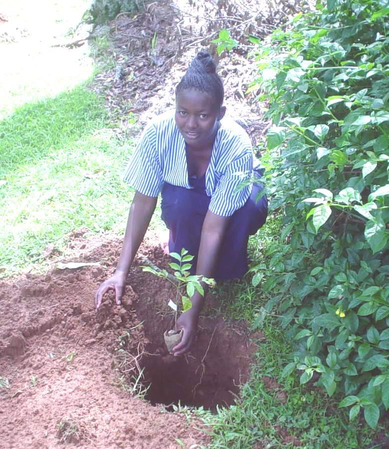 Gam tree Planting