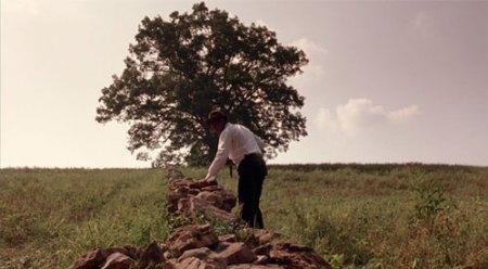 shawshank-oak-tree