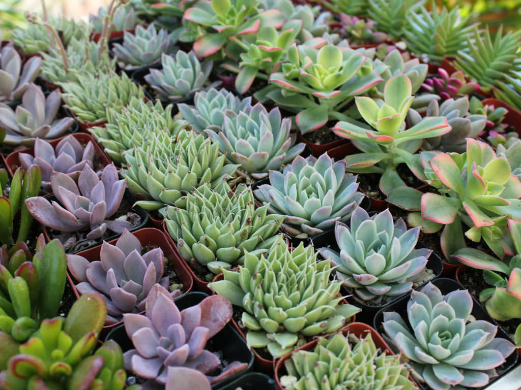 Small Succulent Plants For Sale How To Grow Healthy Succulent Plants World Of Succulents