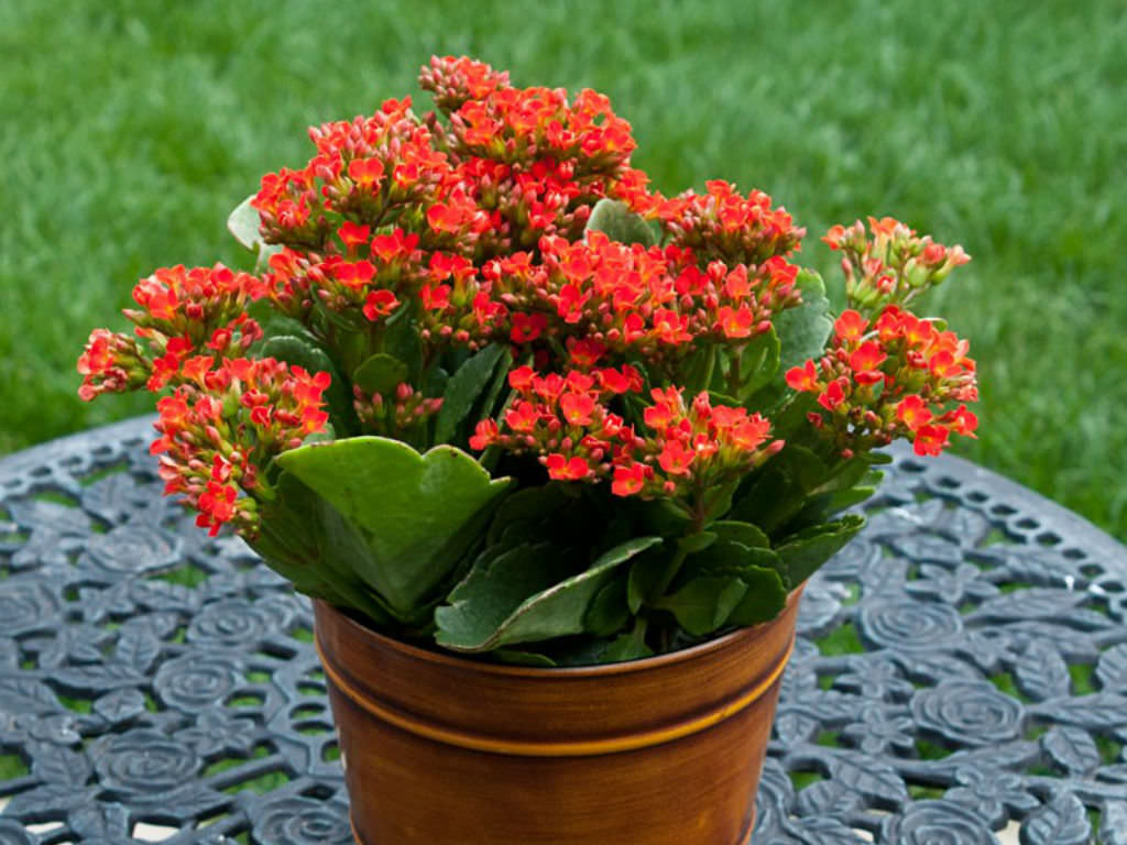 List Of Indoor Flowering Plants 7 Flowering Plants For Indoor Decorating Just Garden Tools