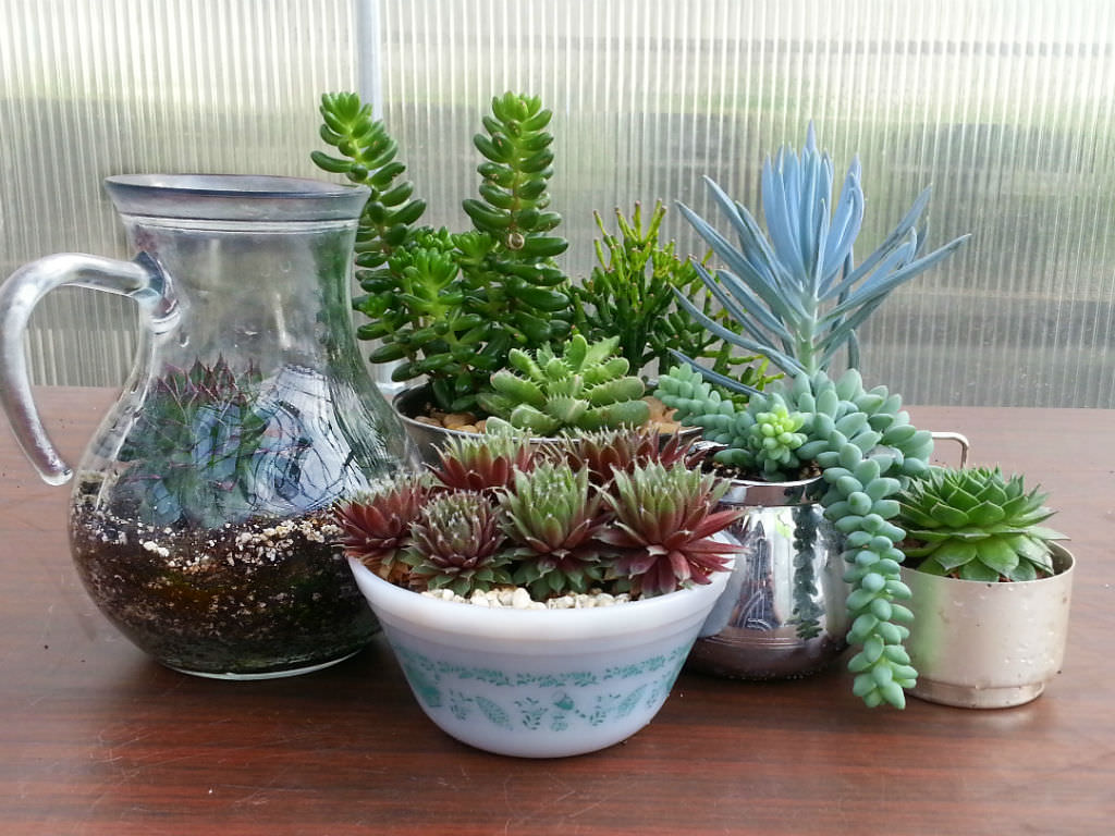 Indoor Plant Types How To Identify Your Succulent Plant World Of Succulents