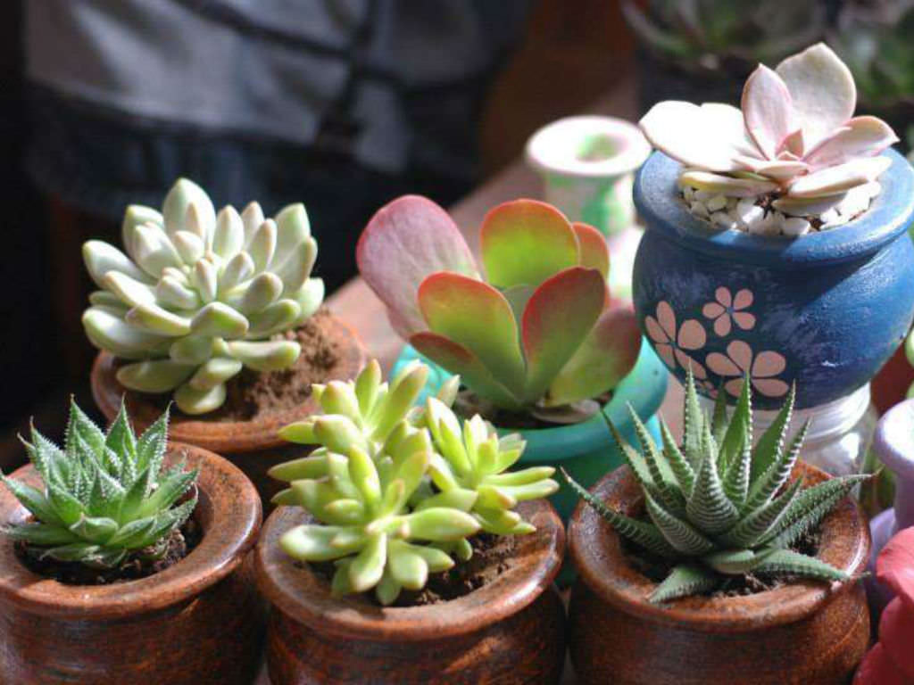 Cactus Planting Pots Easy Tips On How To Grow Succulents World Of Succulents