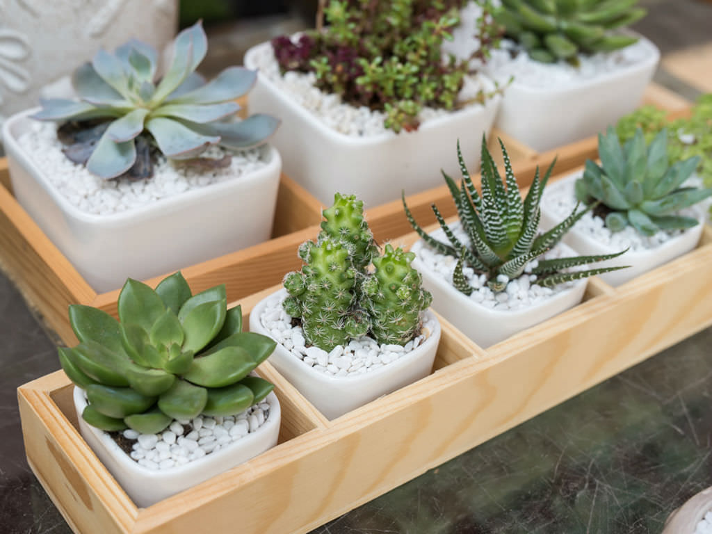 Inside Plants How To Avoid Killing Your Indoor Succulents World Of