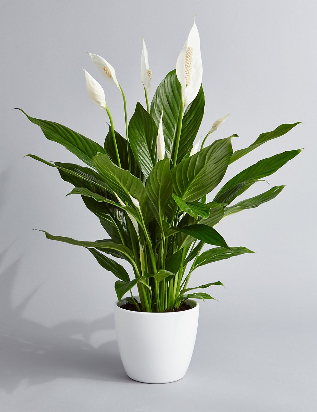 Indoor Plants And Flowers Indoor Plants Help You Sleep Better World Top Updates