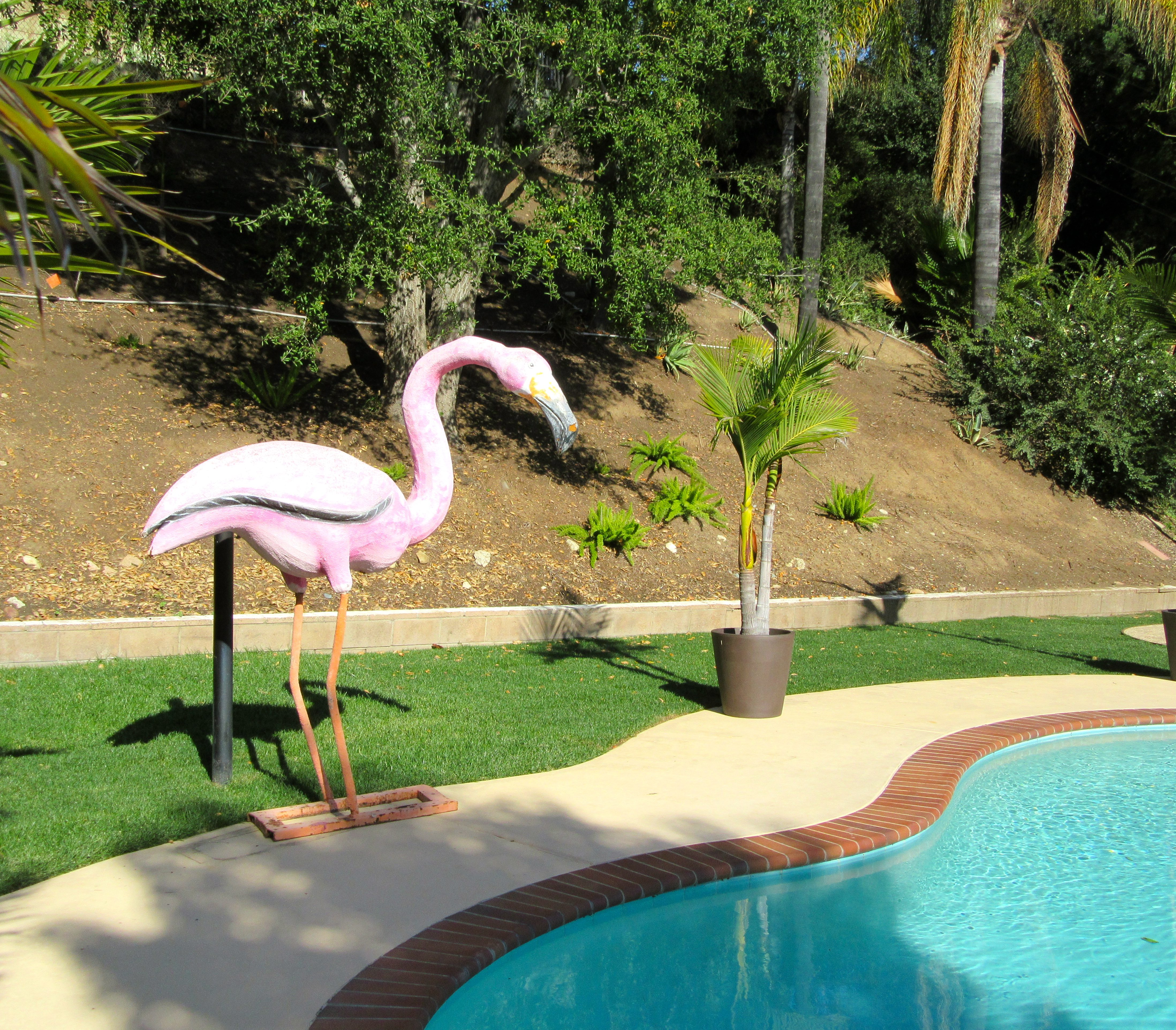 Flamingo Pool Dates Pink Thing Of The Day Pink Flamingo Pool Statue The