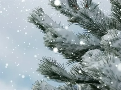 Christmas Snow Falling Wallpaper Evergreen Branches And Falling Snow Videos2worship