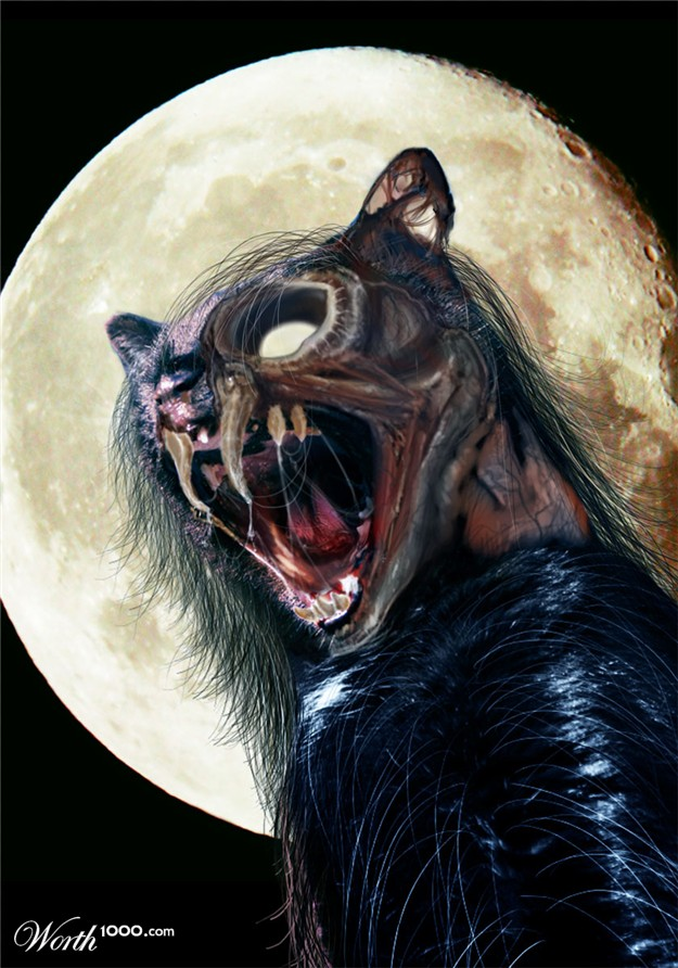 Animal Face Wallpaper Gallery Zombie Animals