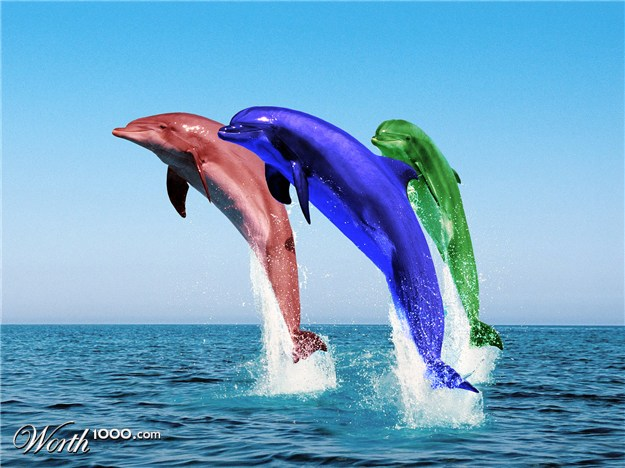 Cute Jumping Spider Wallpaper Different Colored Dolphins