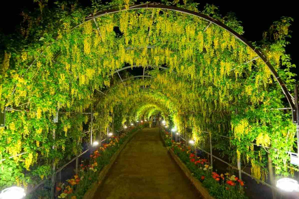 13 tree tunnels you have to walk through Wisteria flower tunnel path in japan