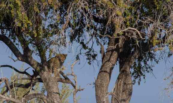 Etosha, Namibia - by Tracey Pictor
