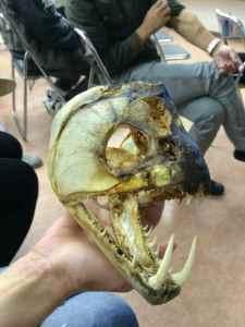 怪魚ハンター2