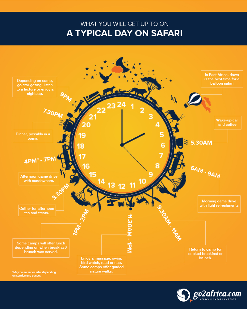 Canapé Relax Quartz Infographic What Happens On Safari Typical Day On African Safari