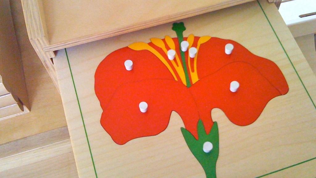 flower-puzzle-science-unit