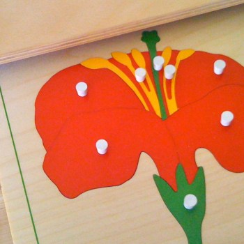 flower-puzzle-science-unit