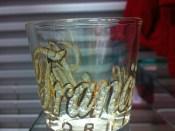 Nice Shot Glass