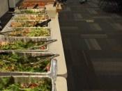 Plenty Of Salad Greens