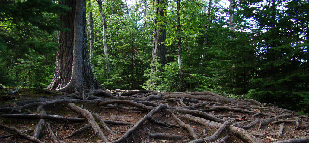 Roots Starter Theme for WordPress Will Become Framework Agnostic in 2015