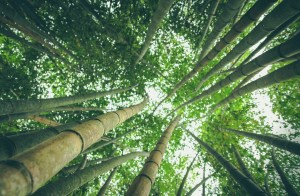 bamboo-forest-1245966_1280