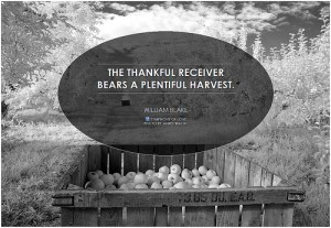 photo credit: The thankful receiver bears a plentiful harvest via photopin (license)