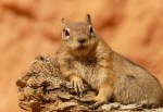 A Squirrel Pee'd On Me! How To Use Catchy Titles To Attract More Readers – By Laura Wing