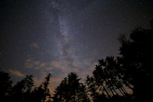 night-trees-milky-way-stars