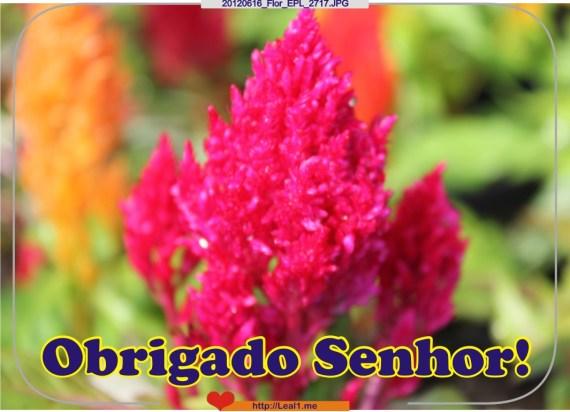 qkhX_20120616_Flor_EPL_2717