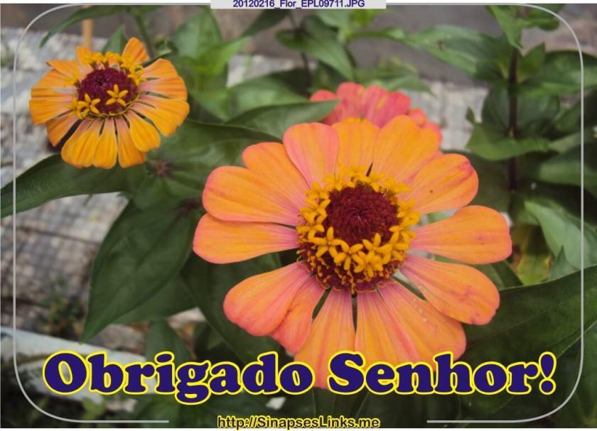 20120216_Flor_EPL09711