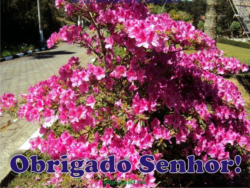 20120124_8106_obrigado_senhor