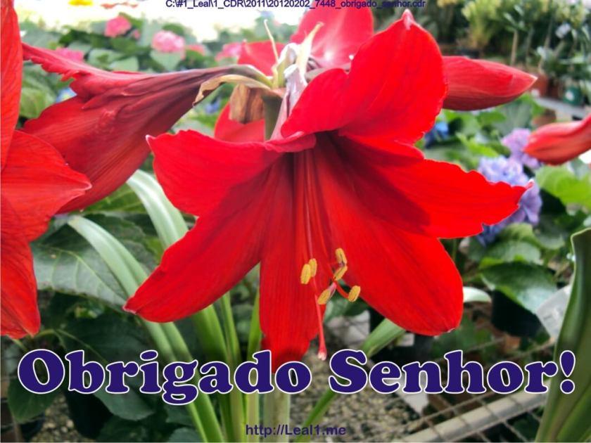 20120202_7448_obrigado_senhor