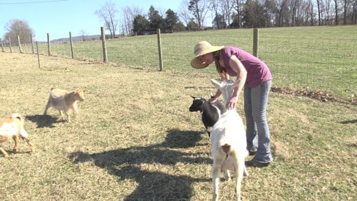 Valley Woman Trades High-Paying Job for Goat Farm - WVIR NBC29