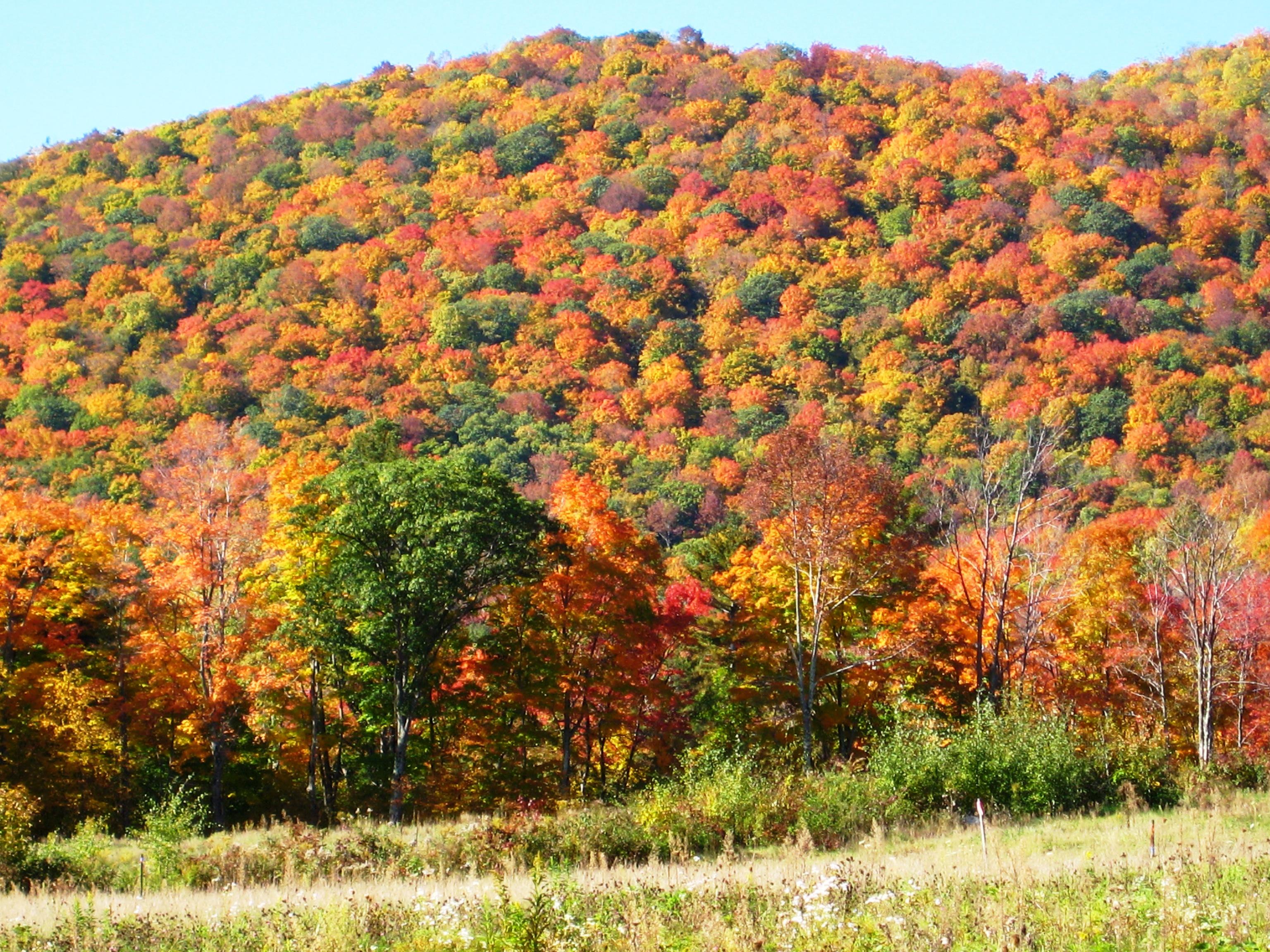 Leaves Wallpaper Fall Appalachian Trail Adventures Announces Their Pre Booking